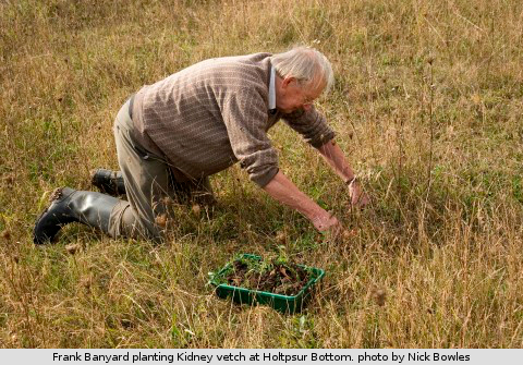 Frank Banyard planting Kidney vetch at Holtspur Bottom