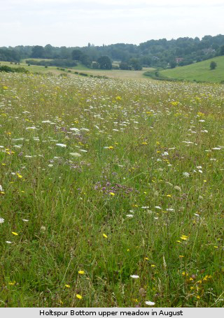 view of Holtspur Bottom meadow in August, by Tony Gillie